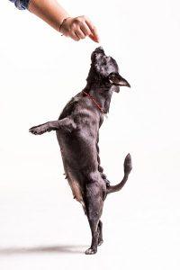 kutya jutalomfalatok