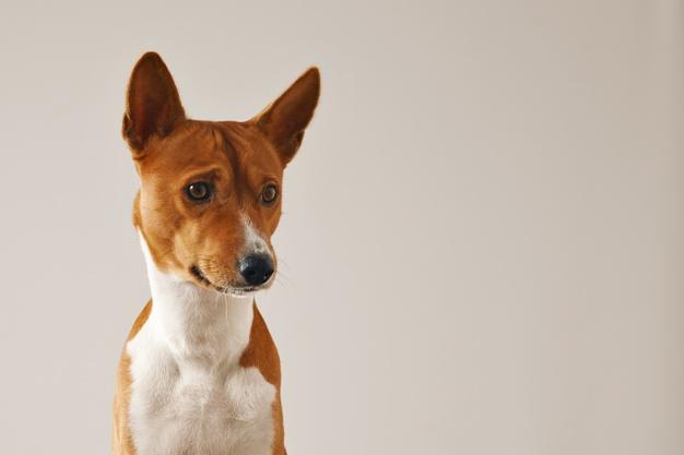 Kutyatáp: van a kutyáknak ízlése?